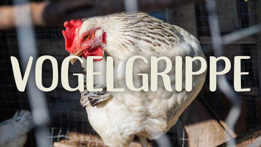 Vogelgrippe in der privaten Hühnerhaltung- und Zucht